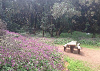 Entorno Efigenia La Gomera 2248